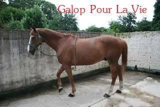 Cadou Dal hongre 19ans - placé hors association Cadou2