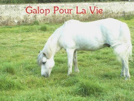 DIABOLO  - OI Poney - né en 1991 - adopté en novembre 2009 par Gaëlle Diabolo18