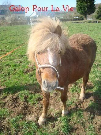 IPEO - ONC poney typé Shetland - adopté en février 2010 par Chloé Ipo2