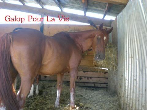 VENUS  jument cheval de selle 22 ans  700e montable - Page 3 Vnus1813