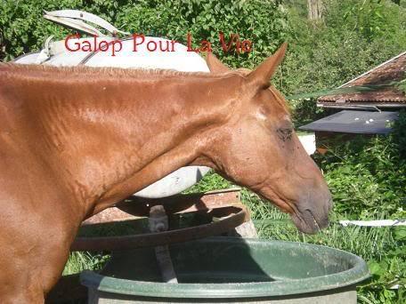 VENUS  jument cheval de selle 22 ans  700e montable - Page 3 Vnus1815