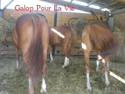VENUS  jument cheval de selle 22 ans  700e montable - Page 3 Vnus1816