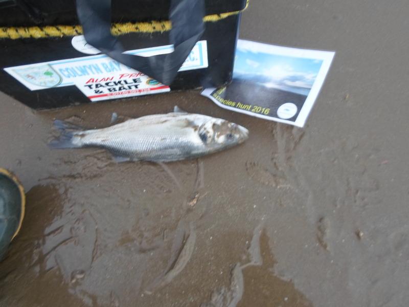Castwatch  - A Denbighshire Fish-Aware Innitiative - Page 4 SAM_0371