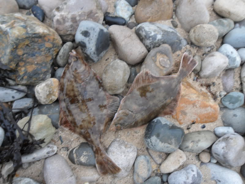 2012 Species hunt names and submissions. Deganwy2012002