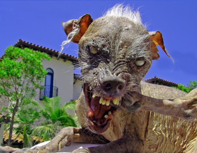 Pwn the pic above! Ugly_dog