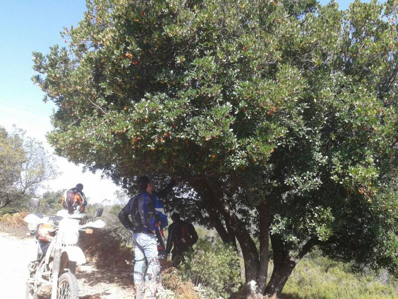 Viaje a Algeciras IMG-20141019-WA0022_zps63307fc4