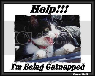 Funny Pictures Catnaped