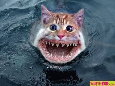 Los Wanwan preparandose Funny-pictures-shark-cat-0YB