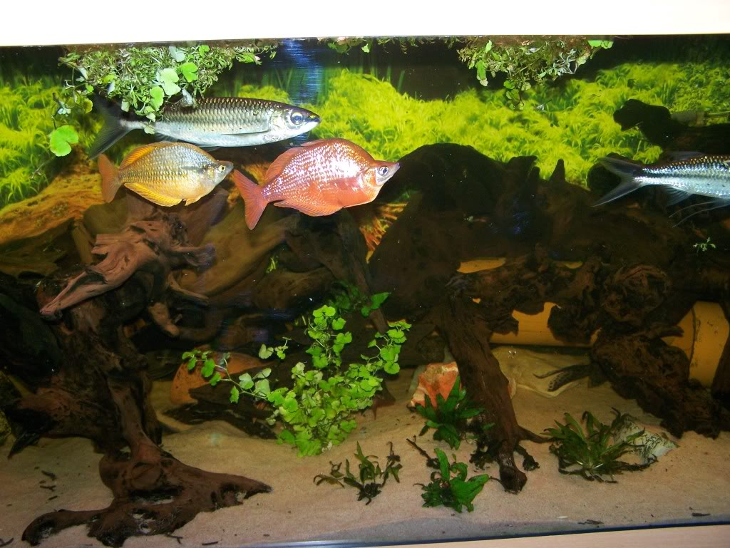 Some of my fish . - Page 2 100_1444