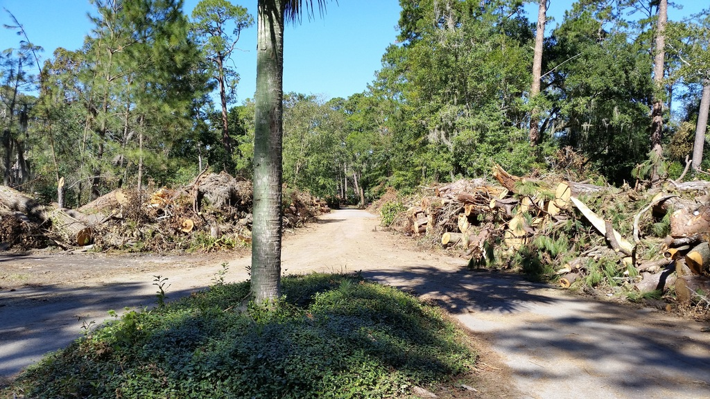 Aftermath of Hurricane Mathew Down%20trees%20at%20Tracis%202_zpsbsgc2axq