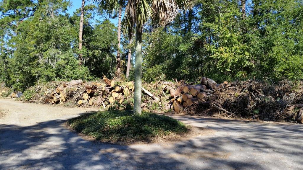 Aftermath of Hurricane Mathew Down%20trees%20at%20Tracis_zps7wbg1yuj