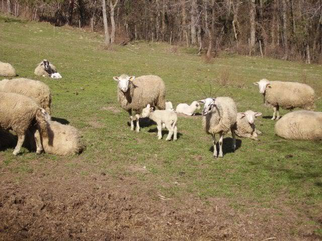 Rando en Auvergne N16redi