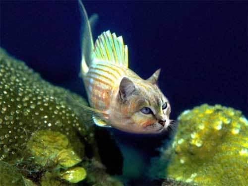 Cat and dog fish Catfish
