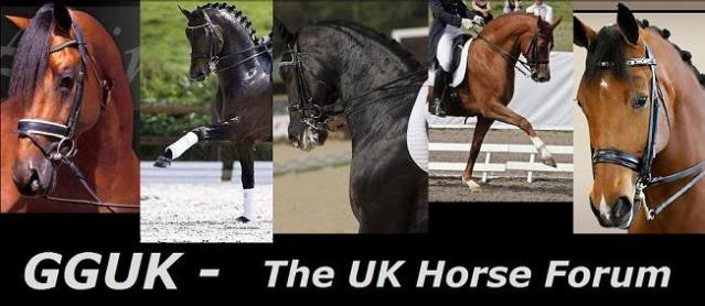 GGUK - The UK Horse Forum