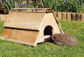 New hedgehog home Hedgehogbox25