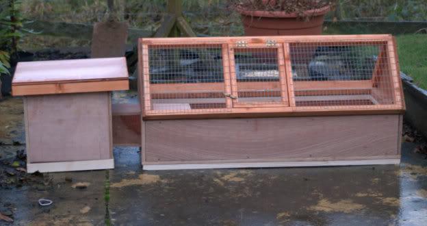 new hog homes/flats Hedgehogrun1