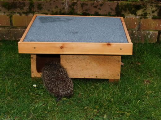 Hedgehog feeder Hedhoghib3