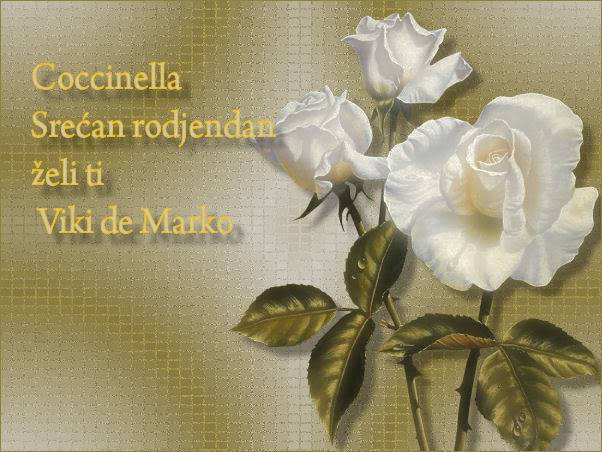 Coccinella Coccinell