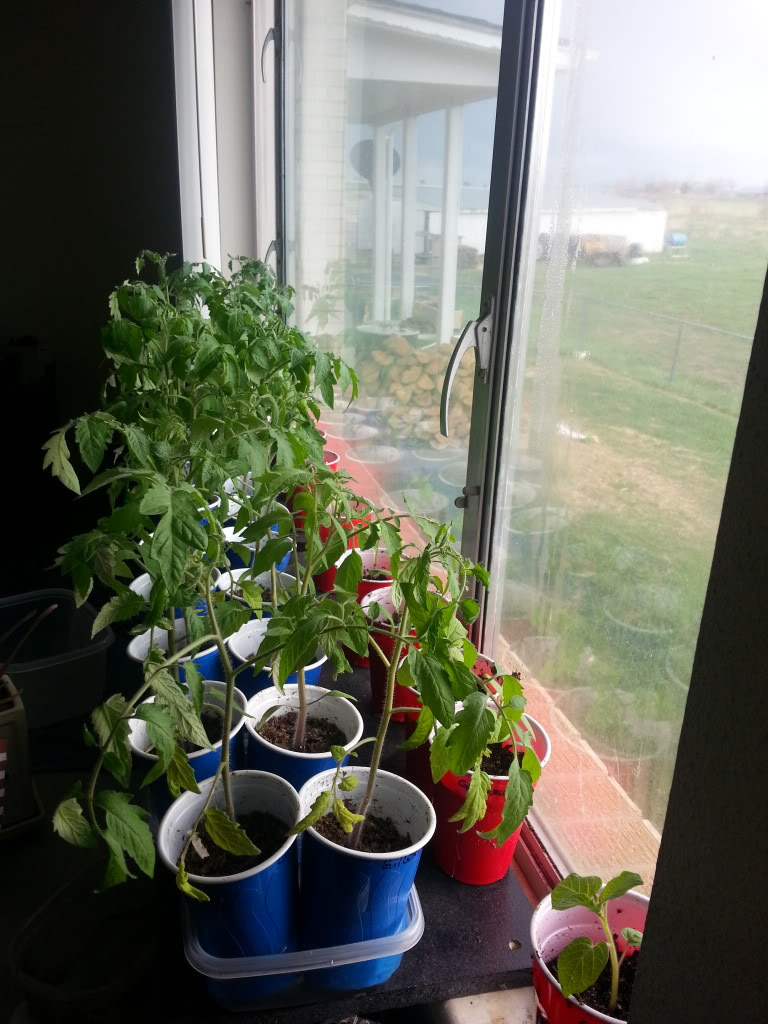 ToMaTo TuEsDaY!  Western mountains & high plains! - Page 2 20130507_174330_zps6a26a3ff