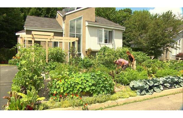 Illegal Front Yard Garden: Canadian Couple's Kitchen Garden Targeted By Authorities  6978129