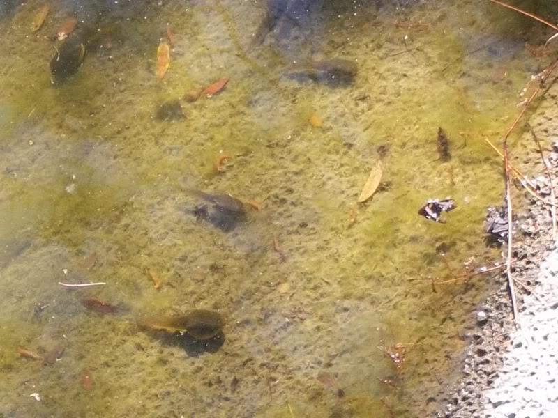 Critters of Coronado 100_1040