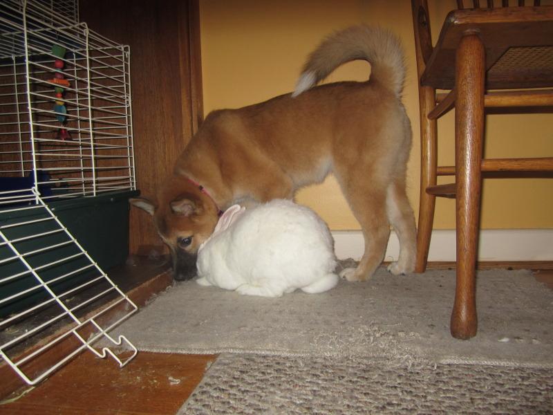 Ezio and Gimli the bunny! IMG_7572