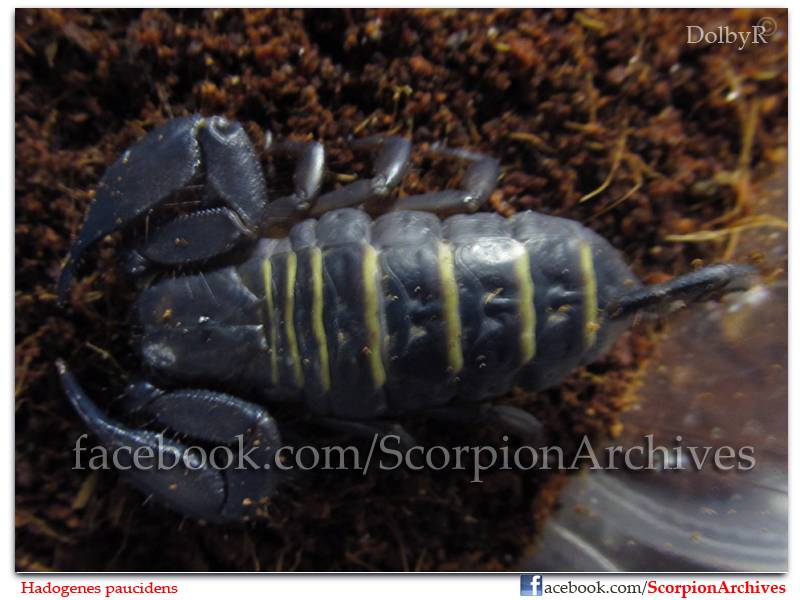 DolbyR's Scorpion Collection IMG_0919
