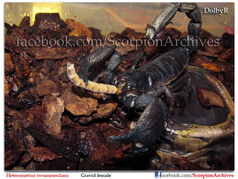 DolbyR's Scorpion Collection IMG-0599
