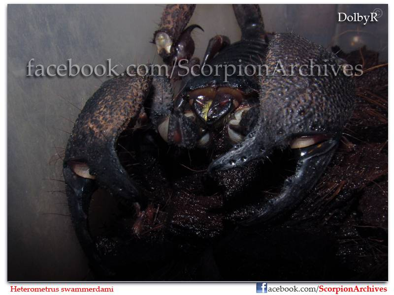 DolbyR's Scorpion Collection IMG_1630