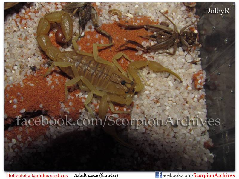 DolbyR's Scorpion Collection IMG_1434