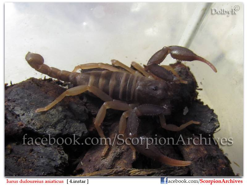 DolbyR's Scorpion Collection IMG_0813