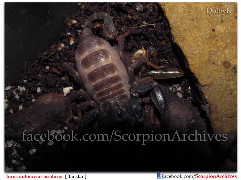 DolbyR's Scorpion Collection IMG_1430
