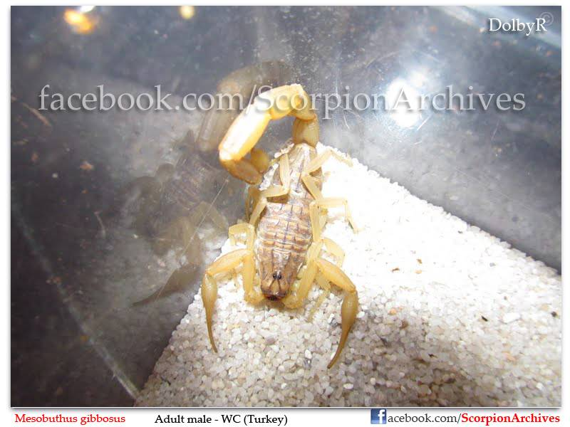 DolbyR's Scorpion Collection 029
