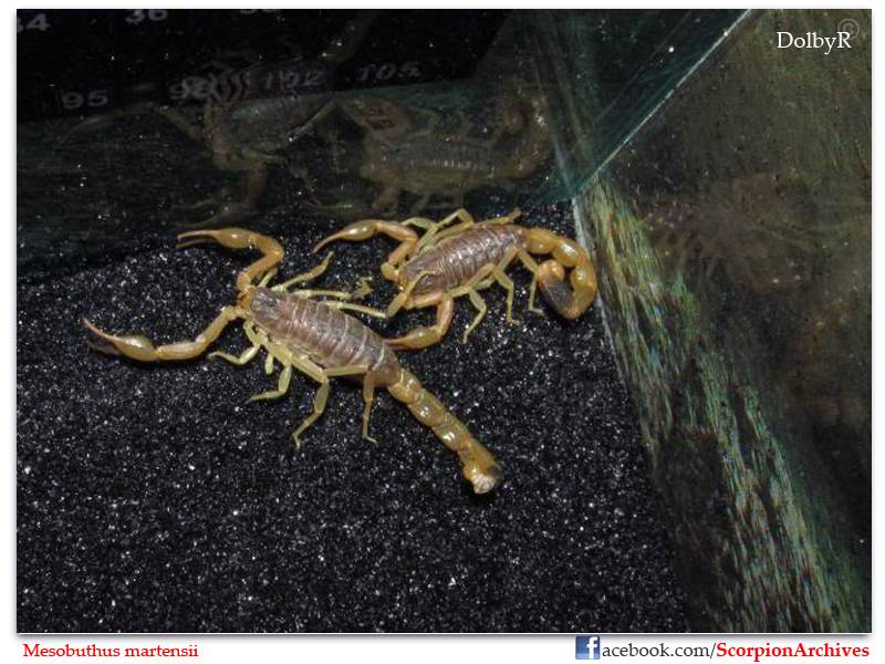 DolbyR's Scorpion Collection IMG_0240