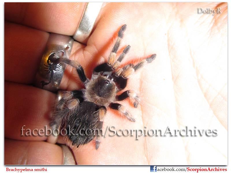 DolbyR's Tarantulas IMG_0725
