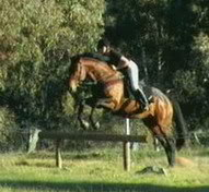 Halado Werdun - Warmblood stallion at stud XC1