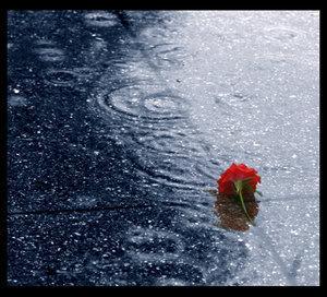 أطفال تحت المطر Dropped_in_the_rain_by_humminggirl
