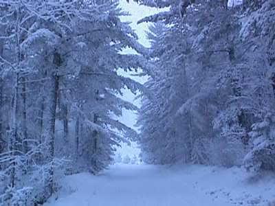 icecycles trees