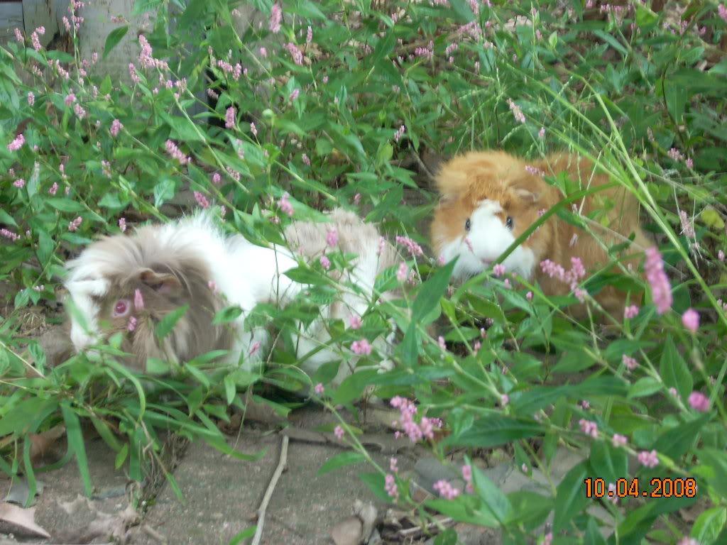 My piggie, Andrew <3 Picture081