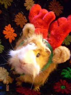 My piggie, Andrew <3 Picture207