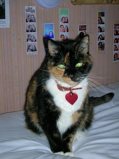 My Kitty!!! Kitty