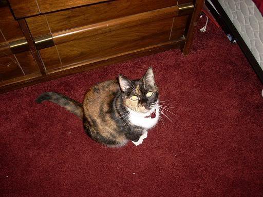 My Kitty!!! Kittygirl