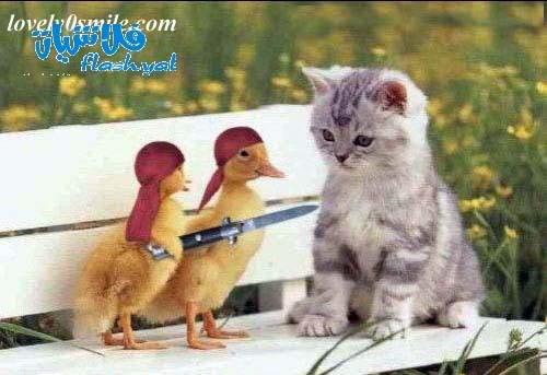 صور مضحكة Funy-cat-21
