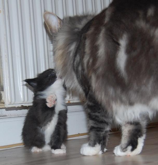 Qalla & Max er blevet forældre 031-1
