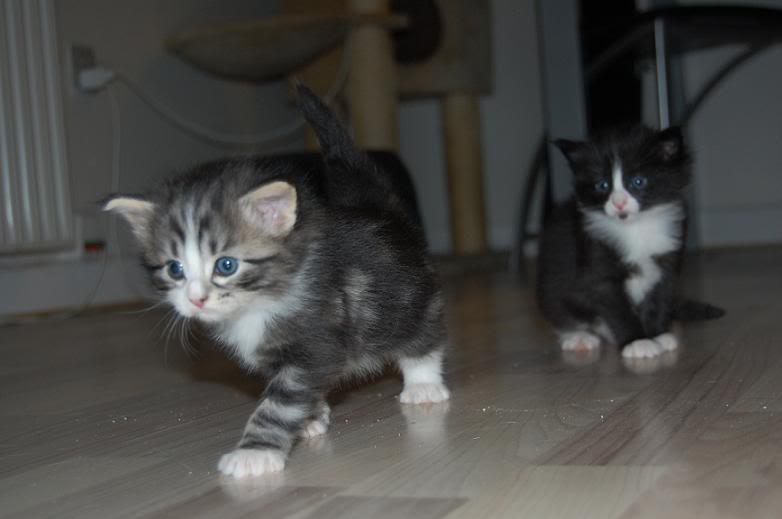 Qalla & Max er blevet forældre 050-1