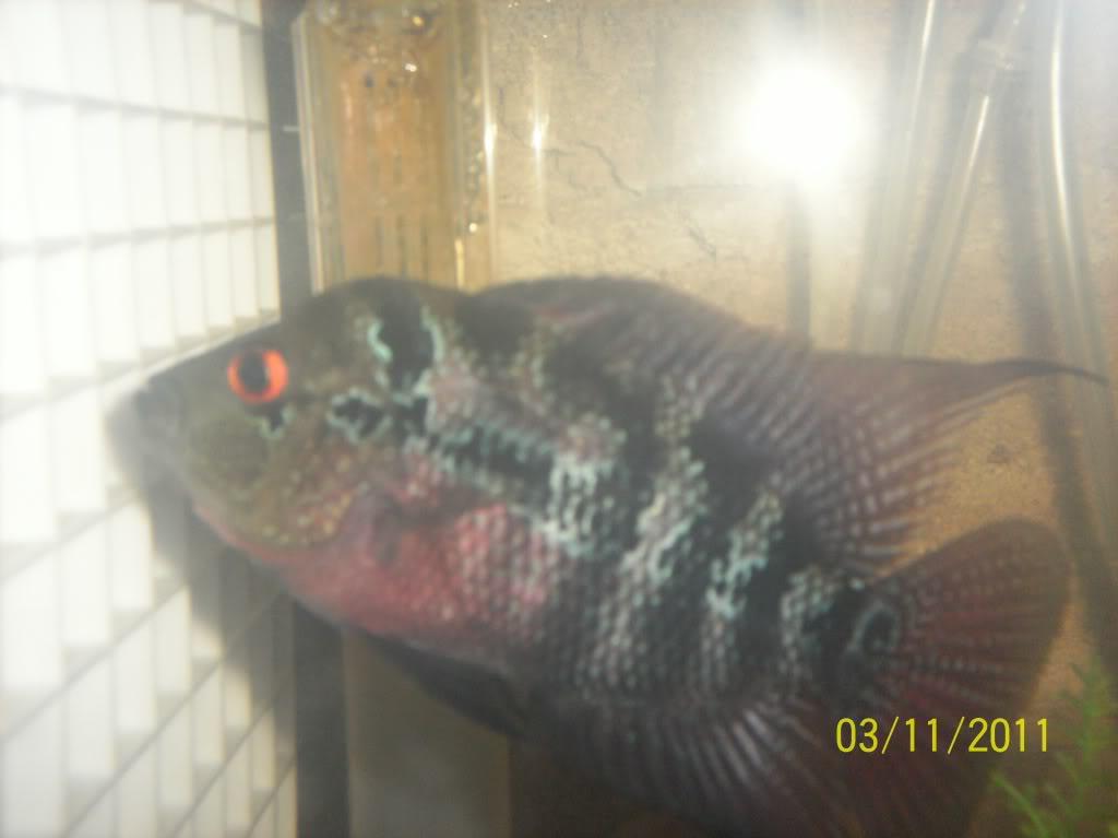 algunos de mis pecesillos 100_0057
