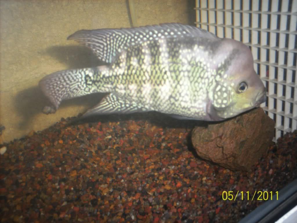 algunos de mis pecesillos 17