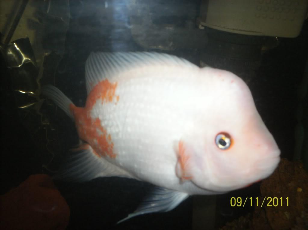 algunos de mis pecesillos 23