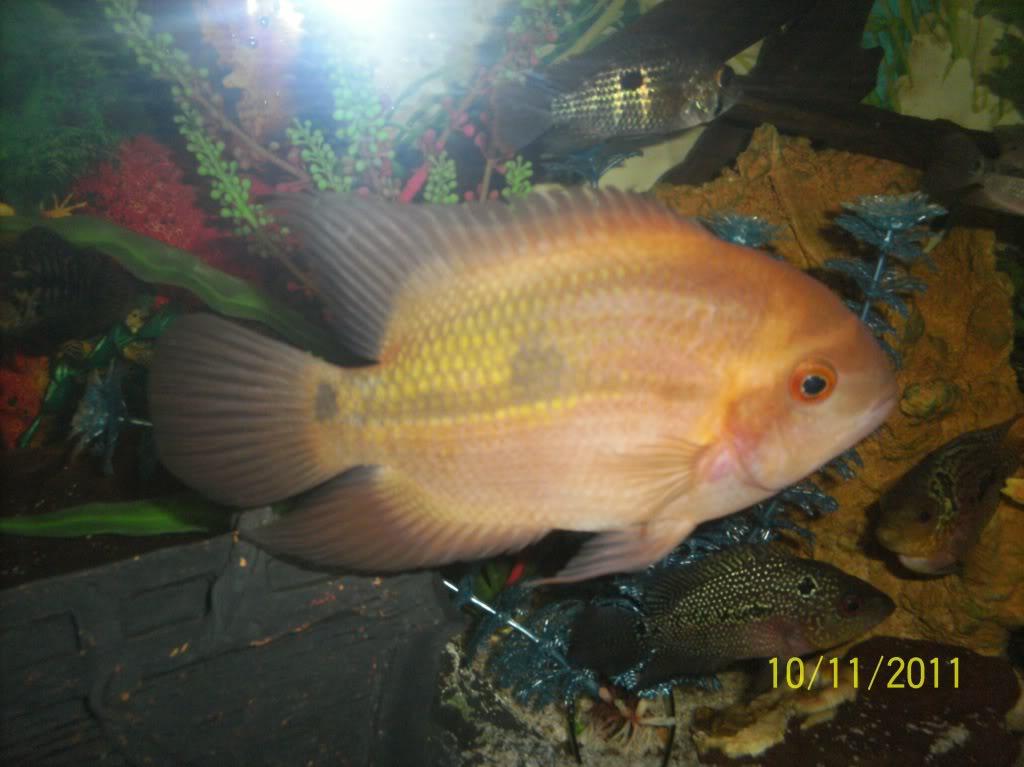 algunos de mis pecesillos TEMPORALIS14CMS