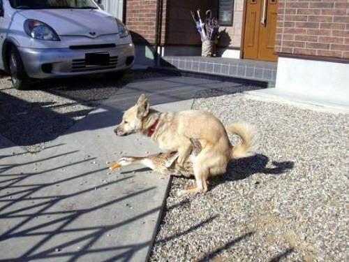 Disquisiciones Caninas Pato-raro